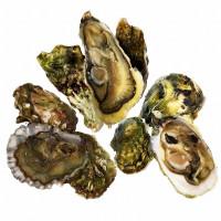 Набор  из 3 видов Тихоокеанских устриц                          (24 шт.)