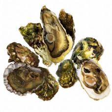 Набор  из 3 видов Тихоокеанских устриц                           (18 шт.)