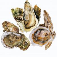Ассорти из 3 видов Тихоокеанских устриц                           (54 шт.)